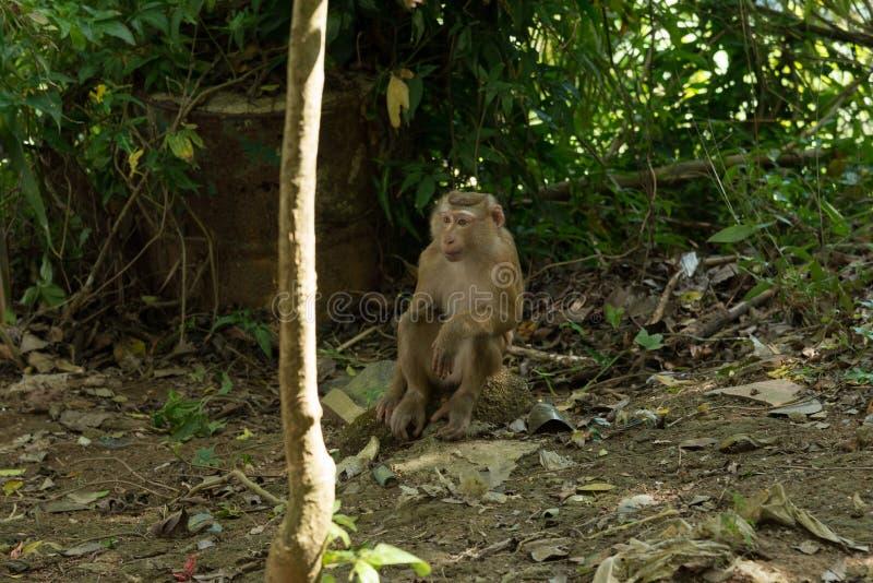 Συνεδρίαση πιθήκων στη ζούγκλα στοκ φωτογραφία