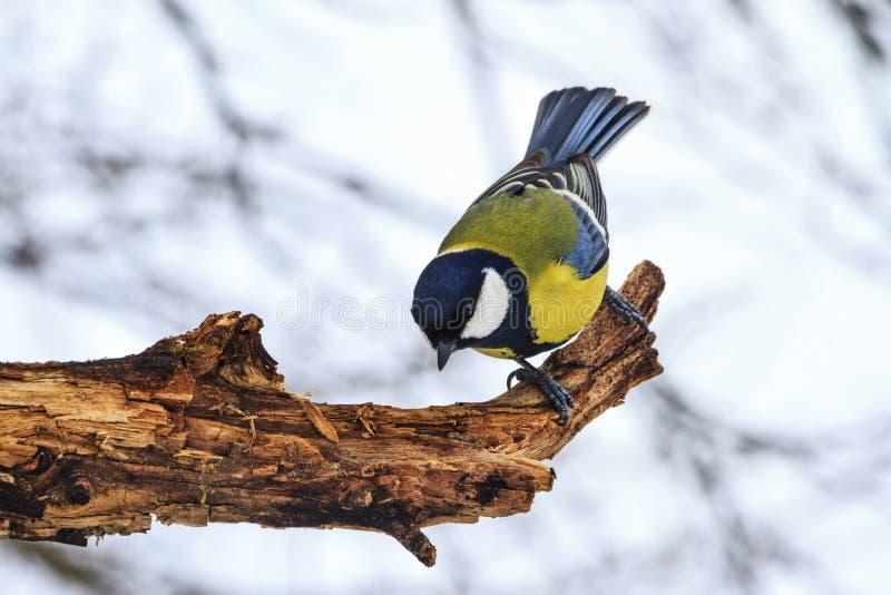 Συνεδρίαση πουλιών σε ένα ξηρό κολόβωμα στοκ εικόνες με δικαίωμα ελεύθερης χρήσης