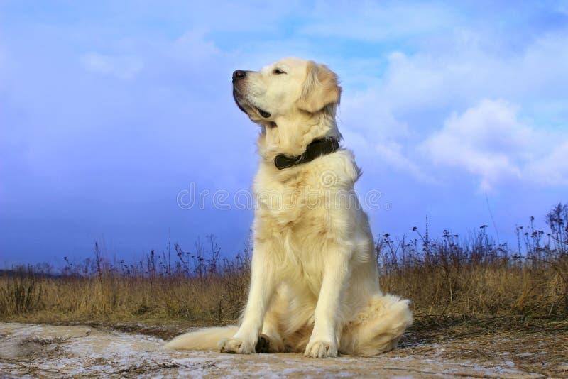Συνεδρίαση σκυλιών στο δρόμο και αναμονή για τον ιδιοκτήτη στοκ φωτογραφία με δικαίωμα ελεύθερης χρήσης