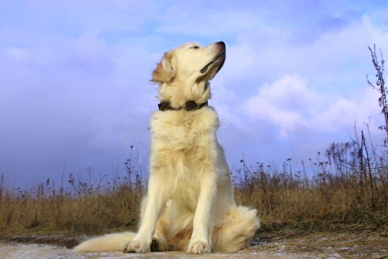 Συνεδρίαση σκυλιών στο δρόμο και αναμονή για τον ιδιοκτήτη στοκ φωτογραφία