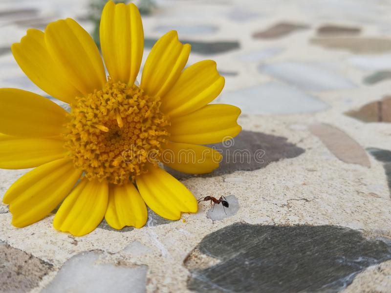 Συνεδρίαση της φύσης στοκ φωτογραφία με δικαίωμα ελεύθερης χρήσης