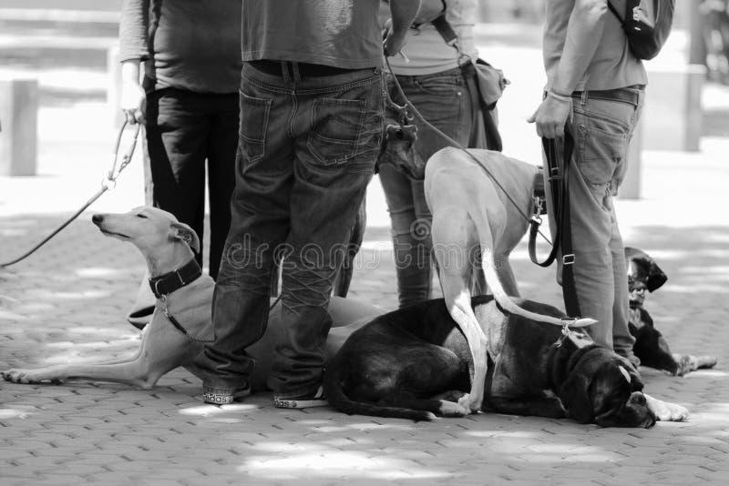 Συνεδρίαση των σκυλιών με τους κυρίους τους στοκ εικόνα με δικαίωμα ελεύθερης χρήσης