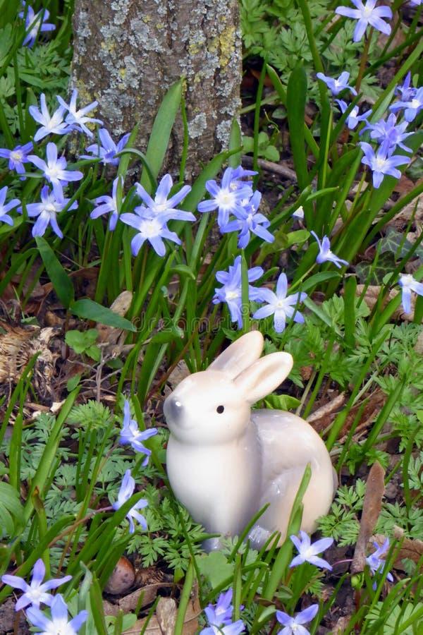 Συνεδρίαση λαγουδάκι Πάσχας μεταξύ squill των λουλουδιών στοκ φωτογραφίες