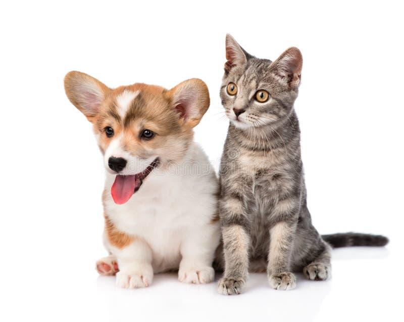 Συνεδρίαση γατών και κουταβιών στο μέτωπο η ανασκόπηση απομόνωσε το λευκό στοκ εικόνες με δικαίωμα ελεύθερης χρήσης