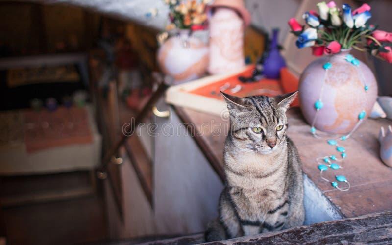 Συνεδρίαση γατών στην είσοδο ενός καταστήματος στη Ρώμη στοκ φωτογραφίες με δικαίωμα ελεύθερης χρήσης