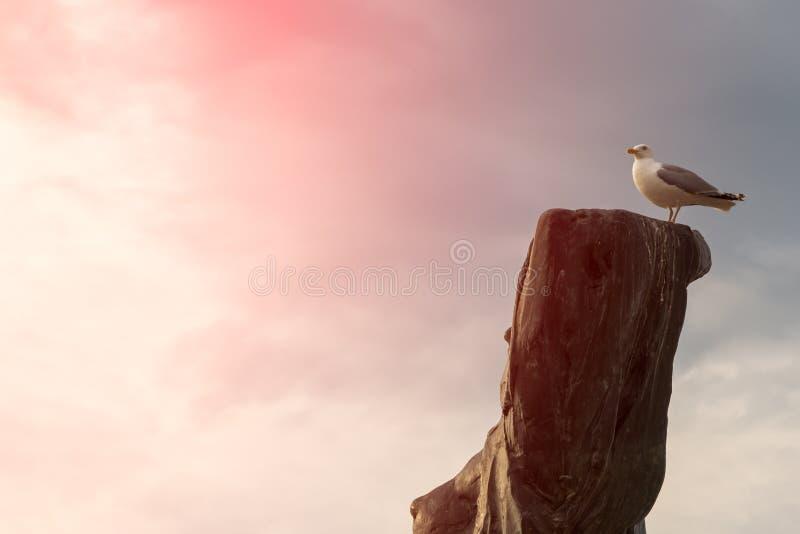 Συνεδρίαση γλάρων πουλιών στο παλαιό ξηρό δέντρο Υπόβαθρο σύννεφων Θαλάσσιο όνειρο έννοιας στοκ φωτογραφία