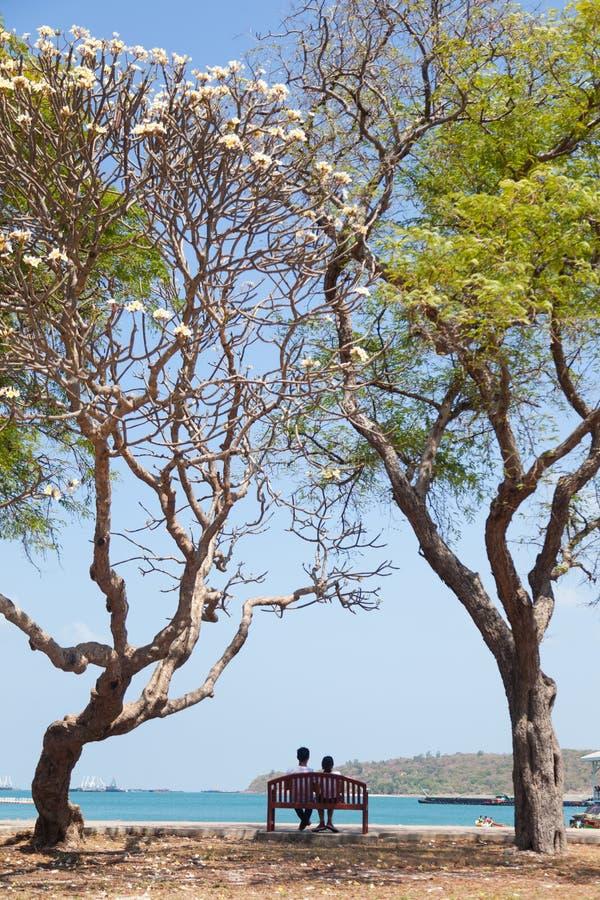 Συνεδρίαση ζεύγους σε έναν πάγκο κάτω από ένα δέντρο στοκ εικόνα