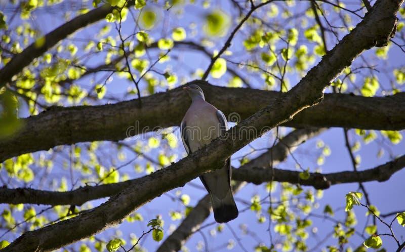 Συνεδρίαση πίτζιν σε ένα δέντρο στοκ εικόνες