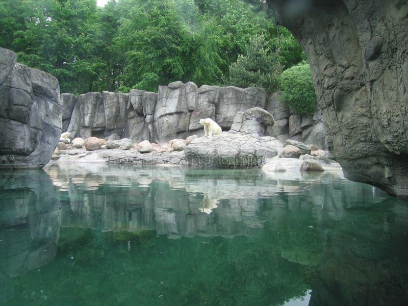 Συνεδρίαση πολικών αρκουδών δίπλα σε μια λίμνη στοκ εικόνες