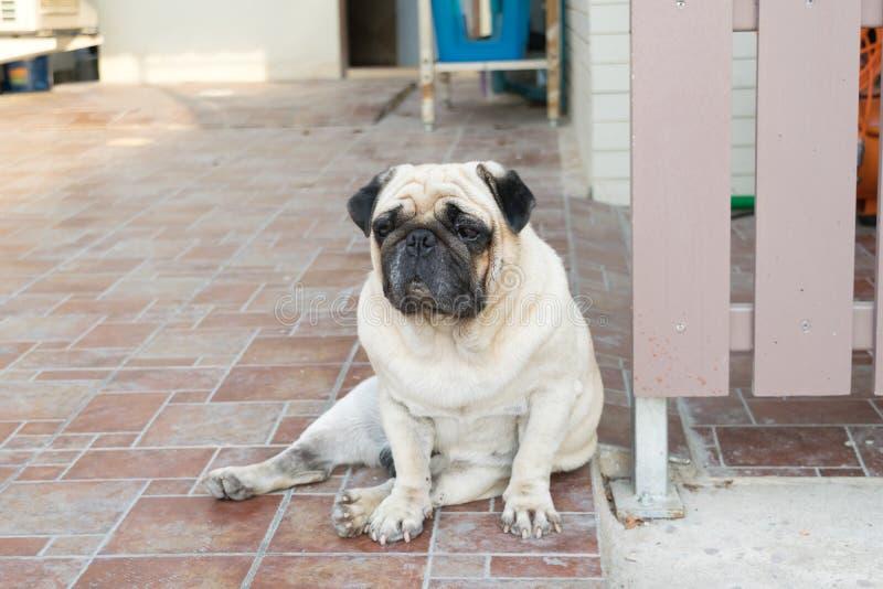 Συνεδρίαση σκυλιών μαλαγμένου πηλού στο πάτωμα στοκ φωτογραφίες με δικαίωμα ελεύθερης χρήσης