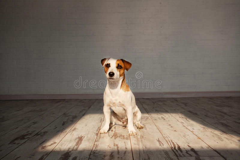Συνεδρίαση σκυλιών στο σπίτι στοκ φωτογραφία με δικαίωμα ελεύθερης χρήσης