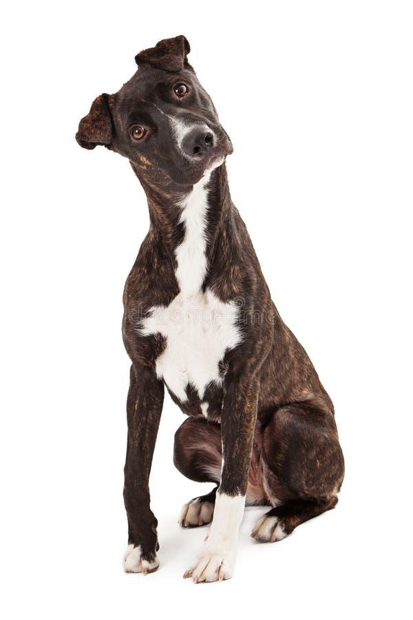 Συνεδρίαση σκυλιών Cur βουνών αρκετά στοκ εικόνες με δικαίωμα ελεύθερης χρήσης