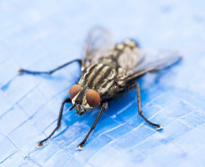 Συνηθισμένη μύγα στο πλαστικό τραμπολίνων στοκ εικόνες με δικαίωμα ελεύθερης χρήσης