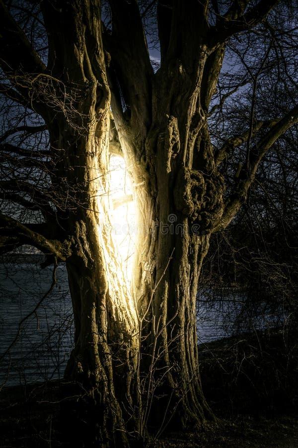 συνημμένο δέντρο αρχείων φαντασίας eps10 στοκ φωτογραφία με δικαίωμα ελεύθερης χρήσης