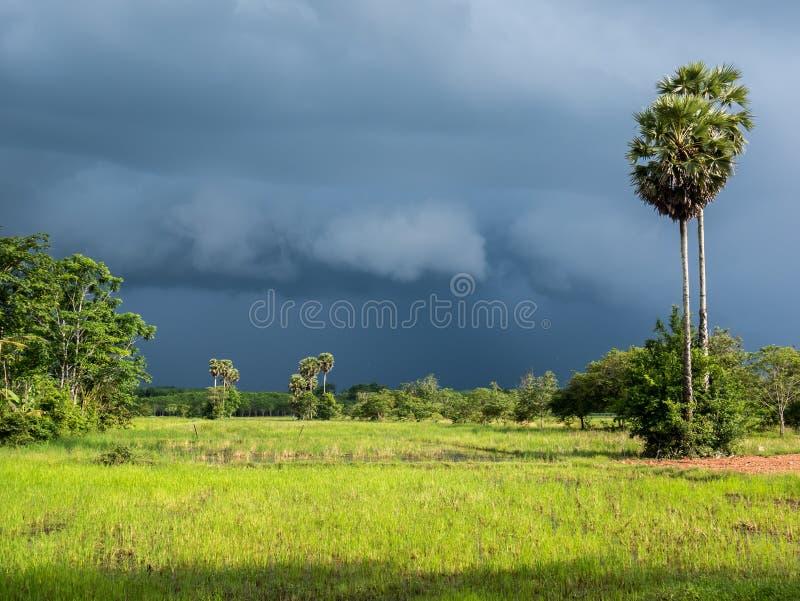 Συννεφιάζω ουρανός ενώ η βροχή έρχεται πέρα από το ρύζι που αρχειοθετούνται και το φοίνικα ζάχαρης στοκ εικόνες με δικαίωμα ελεύθερης χρήσης