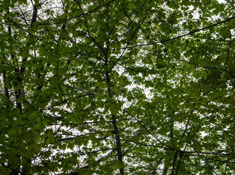 Συννεφιάζω χαμόκλαδο δέντρων στοκ εικόνες με δικαίωμα ελεύθερης χρήσης