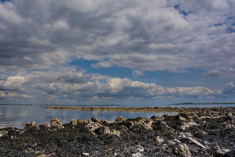 Συννεφιά ουρανός Goese στοκ εικόνα με δικαίωμα ελεύθερης χρήσης