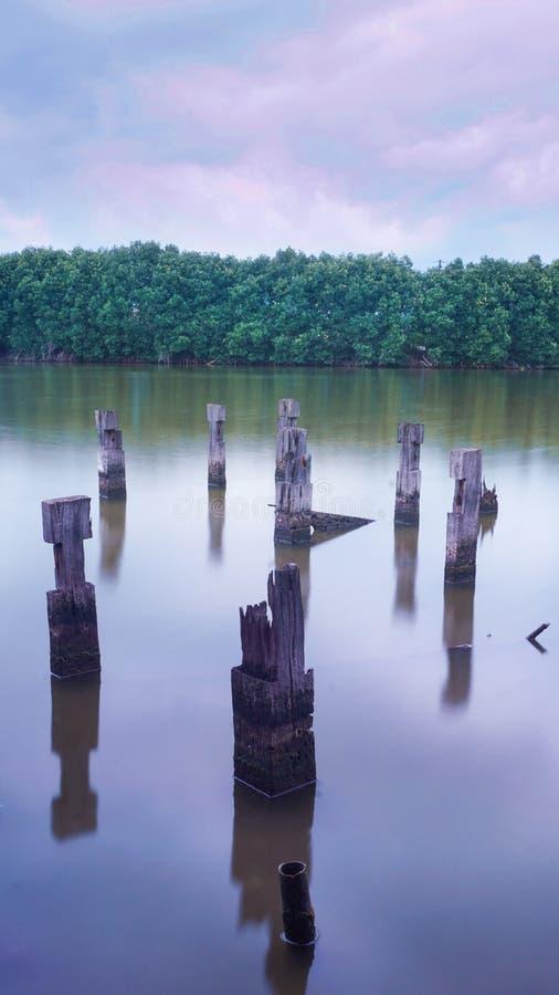 Συντήρηση μαγγροβίων με τη λίμνη και το σπασμένο ξύλο στοκ εικόνες