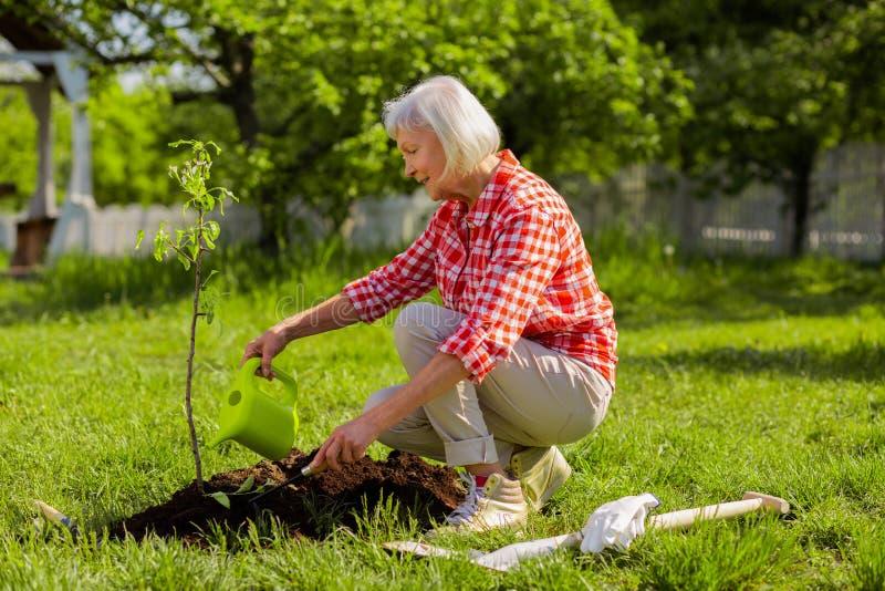 Συνταξιούχος γυναίκα που ποτίζει λίγο δέντρο κοντά στο σπίτι εξοχικών σπιτιών στοκ εικόνες