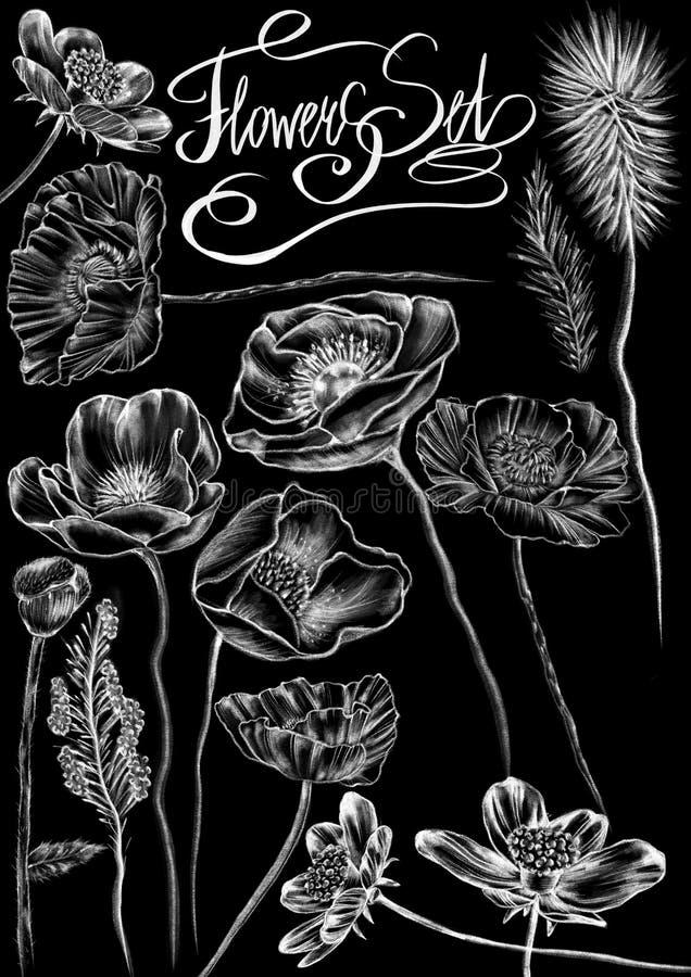 Συρμένα κιμωλία άσπρα λουλούδια ύφους, πλαίσια και λέξεις καλλιγραφίας στο επίπεδο μαύρο υπόβαθρο απεικόνιση αποθεμάτων