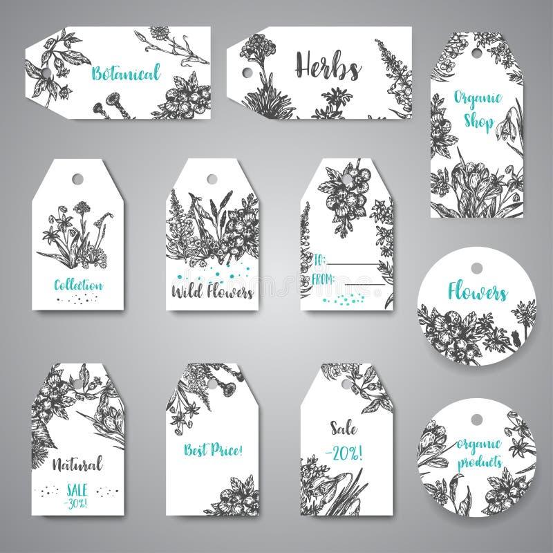Συρμένα τα χέρι χορτάρια και τα άγρια λουλούδια κολλούν και ονομάζουν την εκλεκτής ποιότητας συλλογή των διανυσματικών απεικονίσε απεικόνιση αποθεμάτων