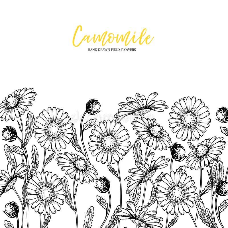 Συρμένα χέρι άγρια λουλούδια σανού Λουλούδι μαργαριτών Chamomile Ιατρικό χορτάρι Χαραγμένη τρύγος τέχνη Σύνθεση συνόρων Αγαθό για απεικόνιση αποθεμάτων
