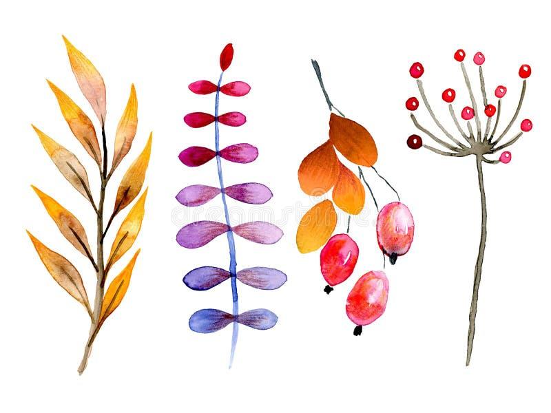 Συρμένα χέρι δασικά φύλλα και μούρα watercolor Απομονωμένα εικονίδια Αφηρημένοι βοτανικοί κλάδοι φθινοπώρου Το Guelder, σκυλί αυξ διανυσματική απεικόνιση