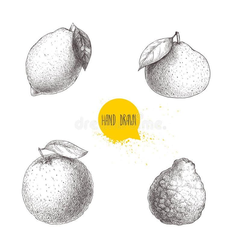 Συρμένα χέρι εσπεριδοειδή ύφους σκίτσων καθορισμένα απομονωμένα στο άσπρο υπόβαθρο Λεμόνι, ασβέστης, tangerine, μανταρίνι, πορτοκ διανυσματική απεικόνιση