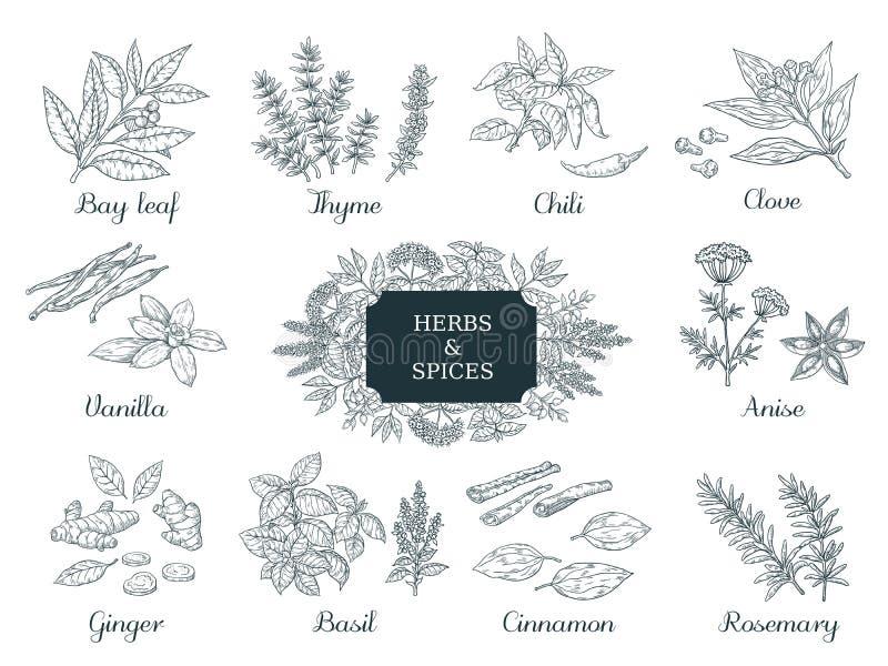 Συρμένα χέρι καρυκεύματα Ινδικά χορτάρια και λαχανικά τροφίμων, ιταλικά και ασιατικά συστατικά, θυμάρι τσίλι και διάνυσμα πιπερορ διανυσματική απεικόνιση
