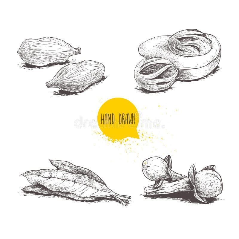 Συρμένα χέρι καρυκεύματα σκίτσων καθορισμένα Φύλλα, nutmegs, καρδάμωμα και γαρίφαλα κόλπων Διανυσματική απεικόνιση χορταριών, καρ διανυσματική απεικόνιση