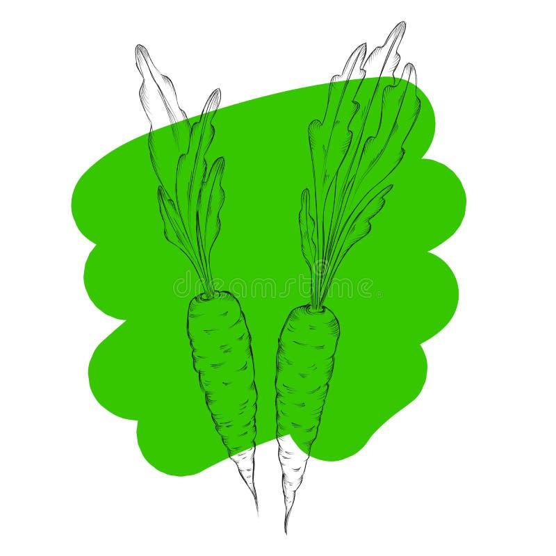 Συρμένα χέρι καρότα Οργανικό υπόβαθρο τροφίμων eco φυτικό Διανυσματική απεικόνιση ύφους σκίτσων διανυσματική απεικόνιση