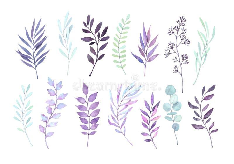 Συρμένες χέρι απεικονίσεις watercolor Βοτανικό clipart φθινοπώρου S ελεύθερη απεικόνιση δικαιώματος