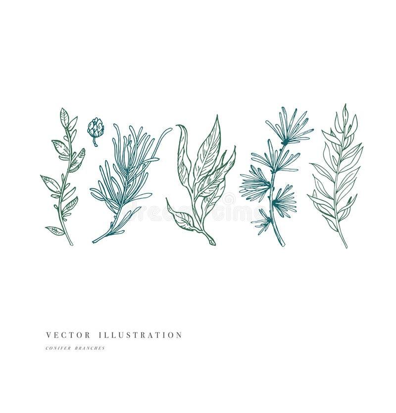 Συρμένες χέρι εγκαταστάσεις και συλλογή Χαραγμένο τρύγος σύνολο λουλουδιών επίσης corel σύρετε το διάνυσμα απεικόνισης απεικόνιση αποθεμάτων