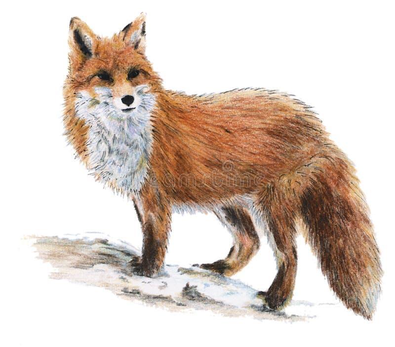 συρμένη αλεπού διανυσματική απεικόνιση