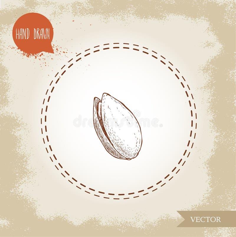 Συρμένη απεικόνιση ύφους σκίτσων φυστικιών χέρι Ανοικτό τηγανισμένο και φρέσκο ενιαίο ανοικτό καρύδι με το σπόρο επίσης corel σύρ διανυσματική απεικόνιση