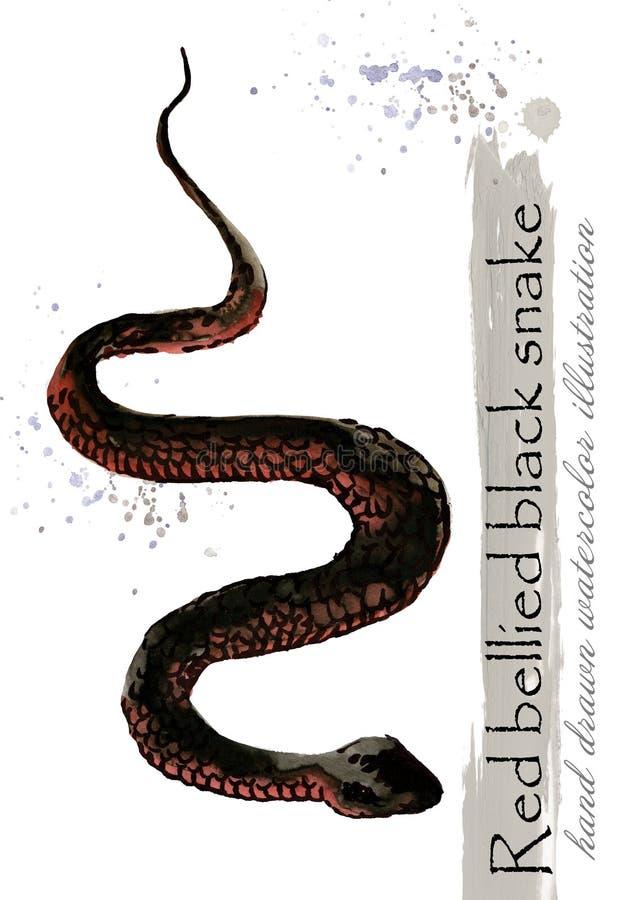 Συρμένη απεικόνιση watercolor φιδιών χέρι Τραχύ ξύλινο Virer απεικόνιση αποθεμάτων