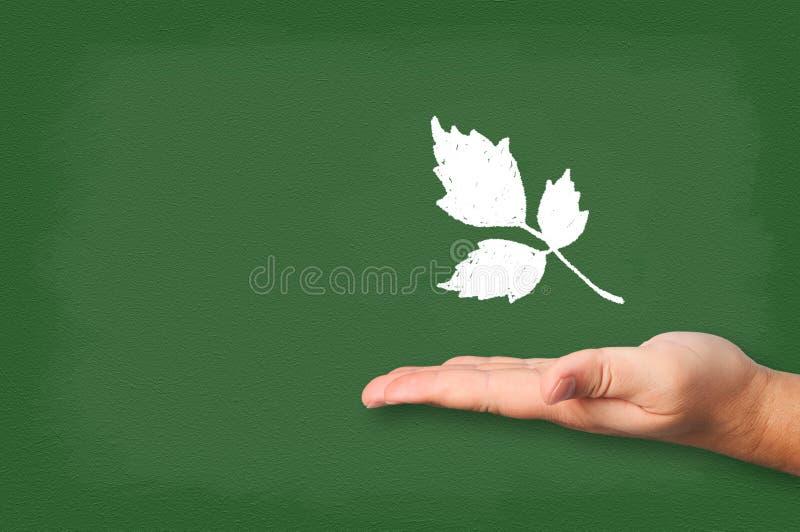 Συρμένη φύλλα κιμωλία στον πίνακα με το χέρι. διανυσματική απεικόνιση
