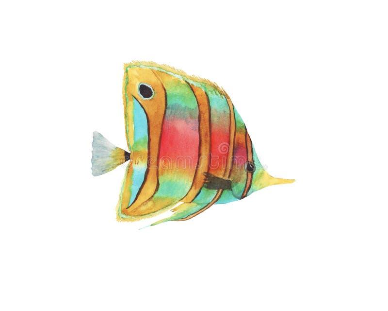 Συρμένη χέρι απεικόνιση watercolor των ζωηρόχρωμων φωτεινών τροπικών ψαριών που απομονώνεται ελεύθερη απεικόνιση δικαιώματος