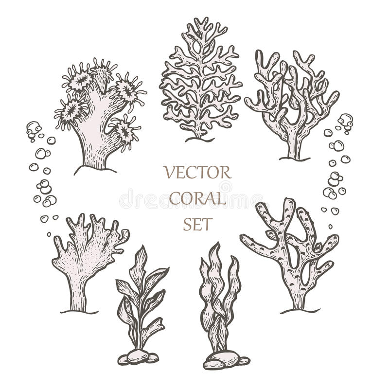 Συρμένη χέρι υδρόβια διανυσματική απεικόνιση κοραλλιών doodle ελεύθερη απεικόνιση δικαιώματος
