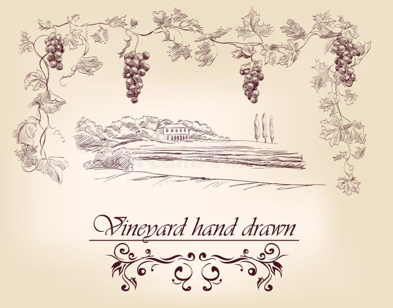 Συρμένοι χέρι αμπελώνες ετικετών διανυσματική απεικόνιση