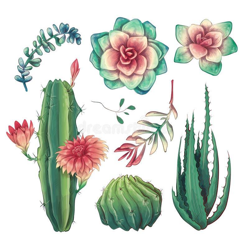 Συρμένοι χέρι ζωηρόχρωμοι κάκτοι και succulent σύνολο Houseplant, κάκτος, τροπικές εγκαταστάσεις απεικόνιση αποθεμάτων