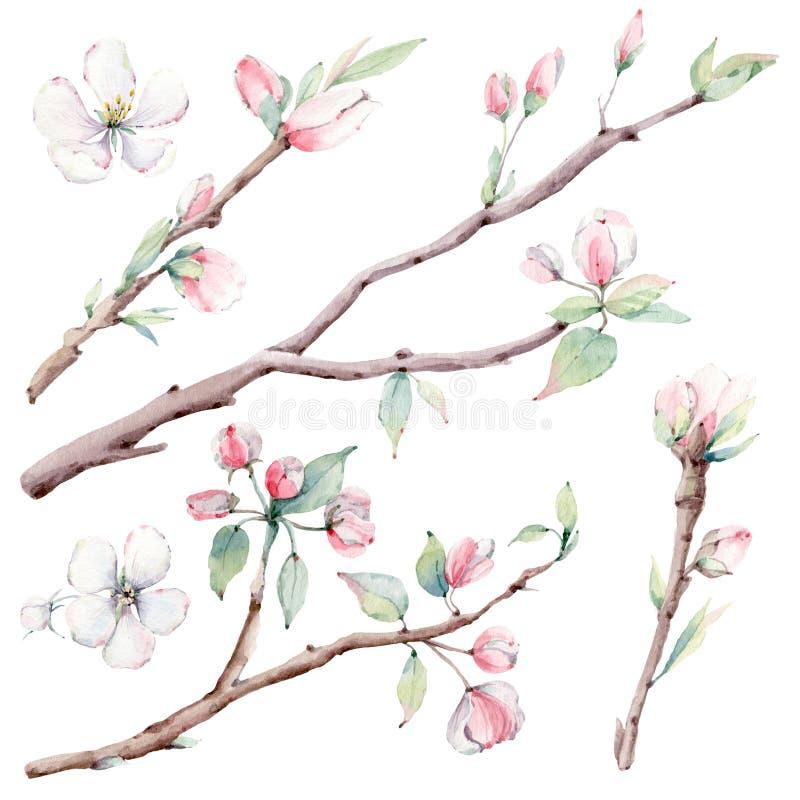 Συρμένοι χέρι κλάδοι δέντρων μηλιάς και λουλούδια, ανθίζοντας δέντρο διανυσματική απεικόνιση
