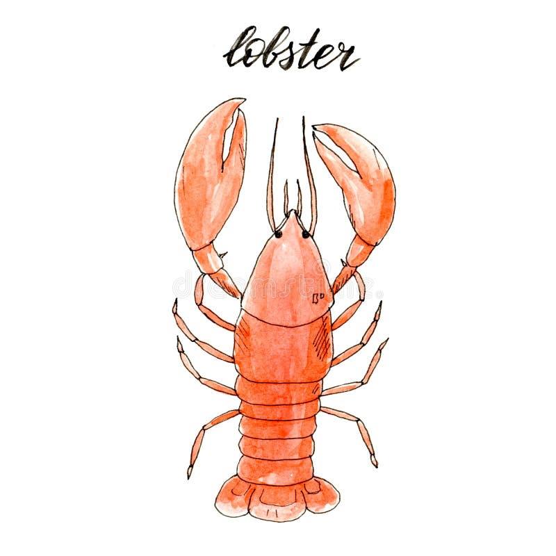Συρμένος χέρι απομονωμένος watercolor αστακός ελεύθερη απεικόνιση δικαιώματος