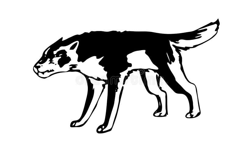 Συρμένος χέρι επιθετικός λύκος Μαύρη διανυσματική δασική αρπακτική εικόνα στο άσπρο υπόβαθρο Ζώο ύφους σκίτσων διανυσματική απεικόνιση