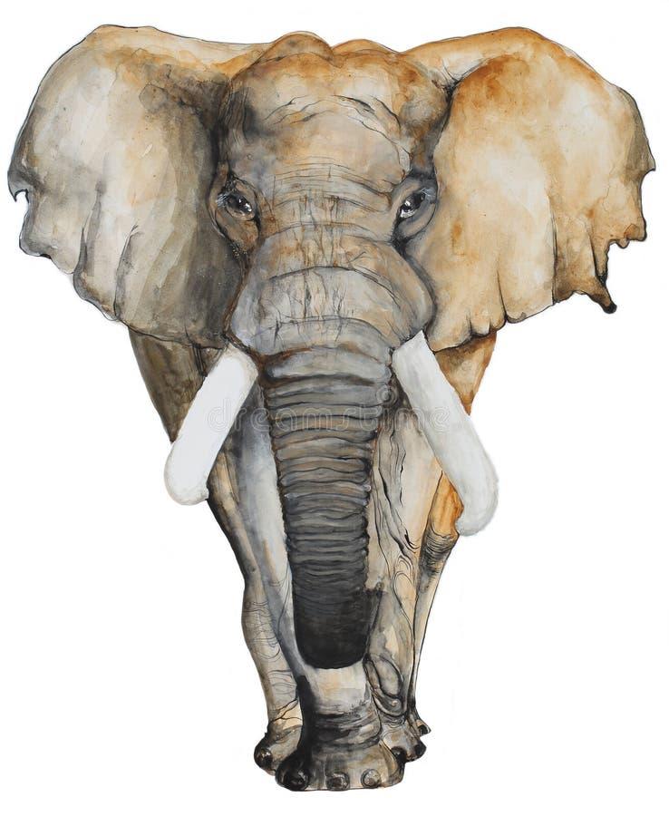 Συρμένος χέρι ελέφαντας Watercolor ελεύθερη απεικόνιση δικαιώματος