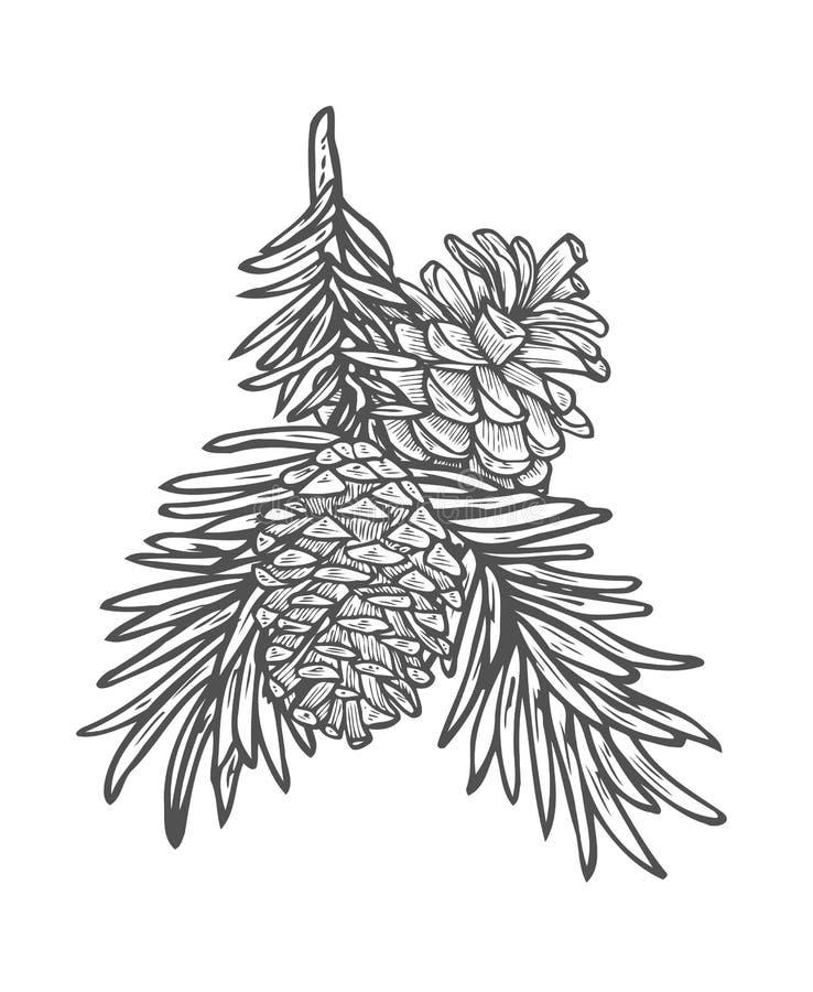 Συρμένος χέρι κλάδος δέντρων πεύκων διανυσματική απεικόνιση
