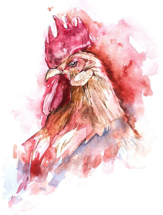 Συρμένος χέρι κόκκορας watercolor απεικόνισης διανυσματική απεικόνιση