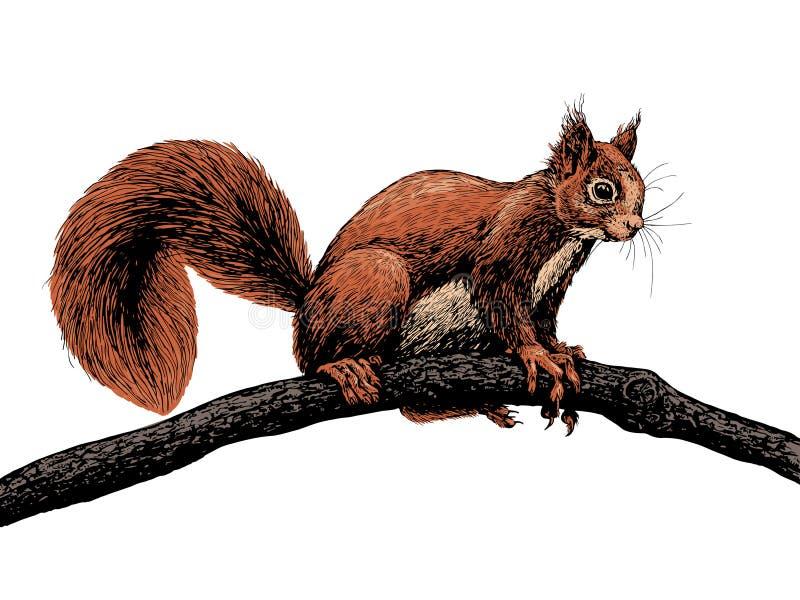 Συρμένος χέρι σκίουρος σε έναν κλάδο ελεύθερη απεικόνιση δικαιώματος