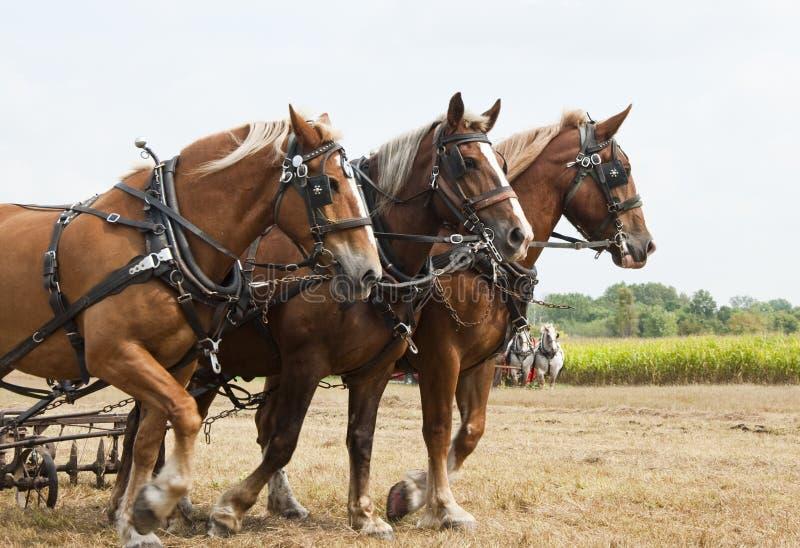 συρμένο επιδείξεις άλογ& στοκ εικόνες