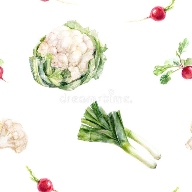 Συρμένο κουνουπίδι ραδικιών πράσων Watercolor το χέρι απομόνωσε το άνευ ραφής σχέδιο απεικόνιση αποθεμάτων